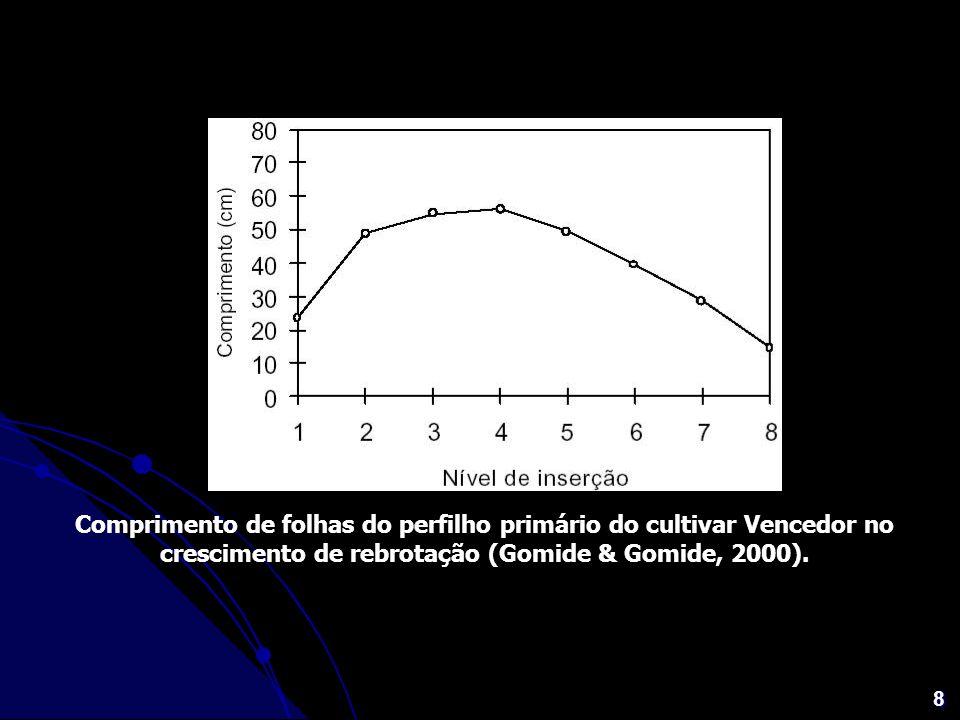 Comprimento de folhas do perfilho primário do cultivar Vencedor no crescimento de rebrotação (Gomide & Gomide, 2000).