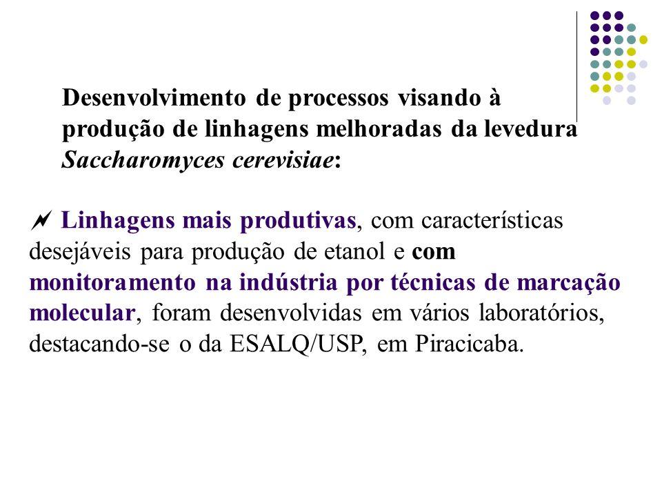 Desenvolvimento de processos visando à produção de linhagens melhoradas da levedura Saccharomyces cerevisiae: