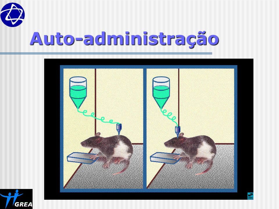 Auto-administração