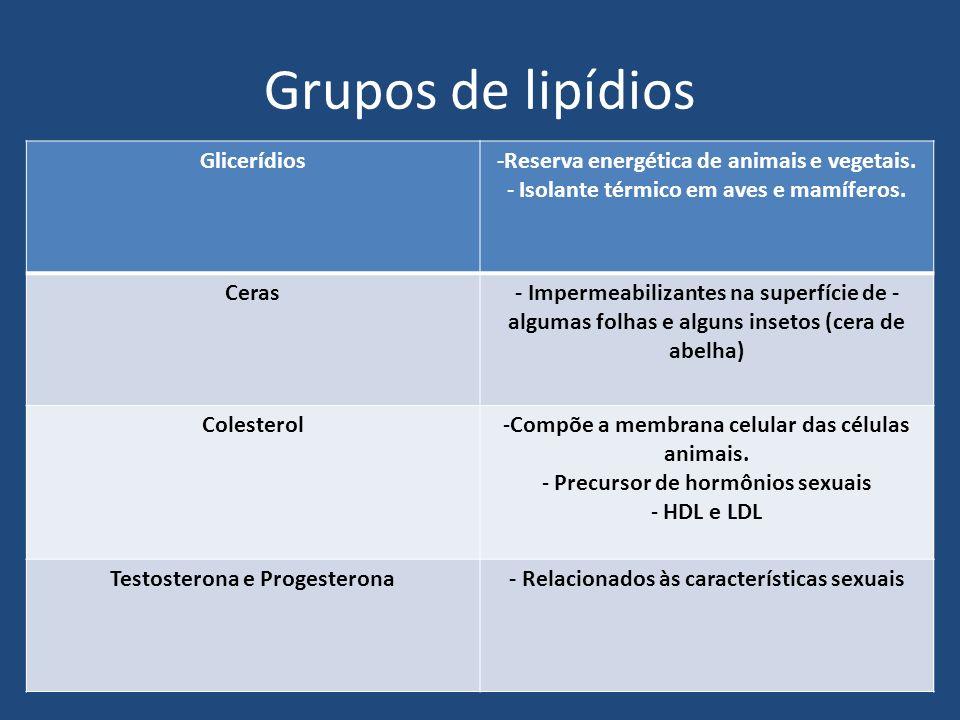 Grupos de lipídios Glicerídios