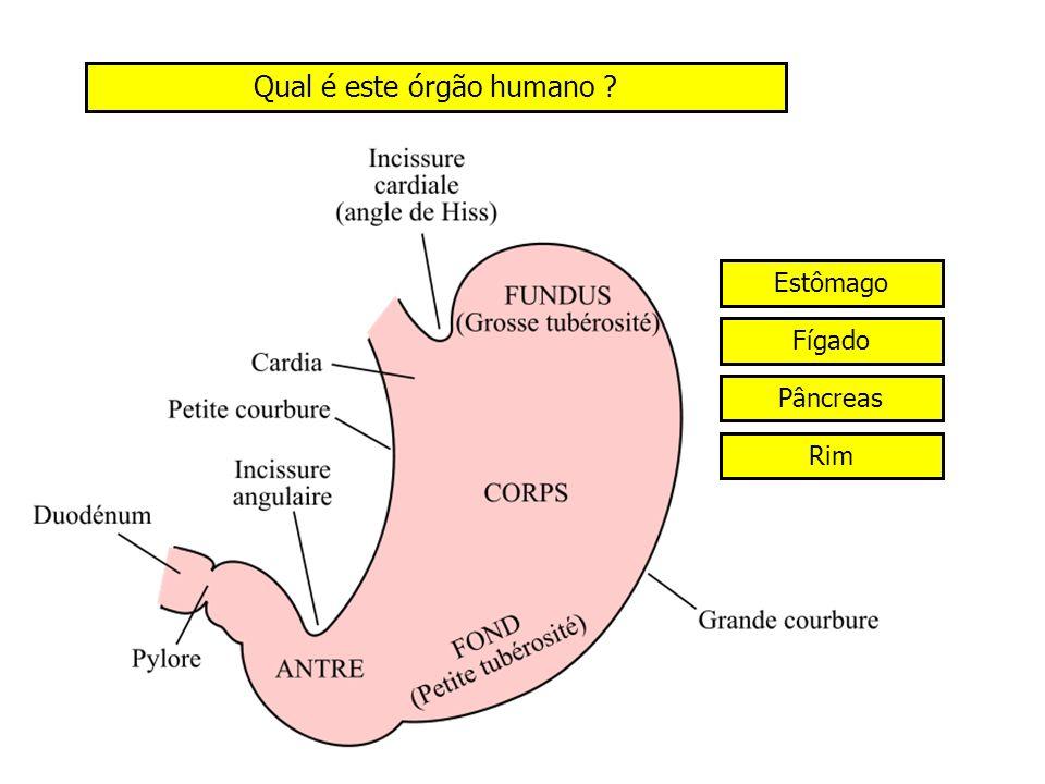 Qual é este órgão humano