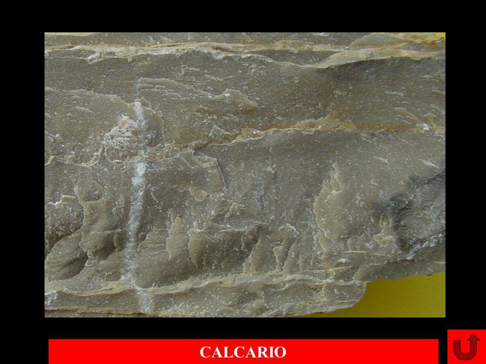 CALCARIO
