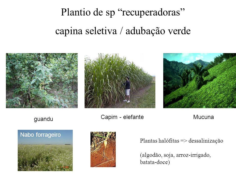 Plantio de sp recuperadoras capina seletiva / adubação verde