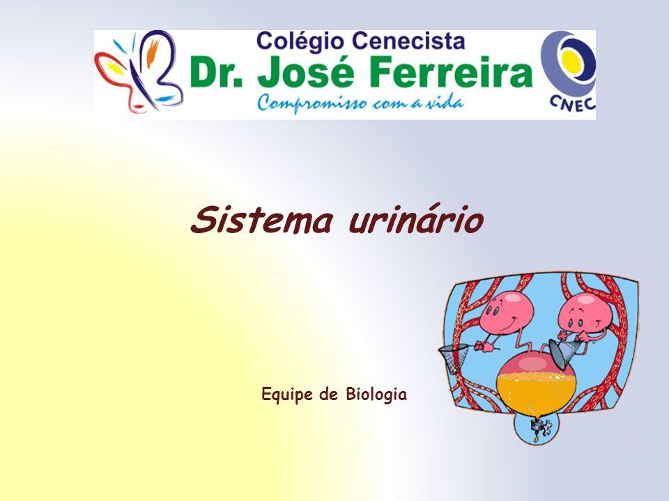 Sistema urinário Equipe de Biologia