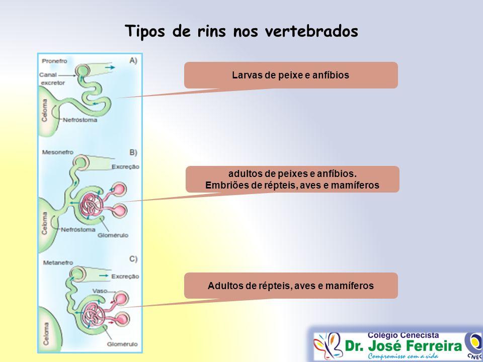 Tipos de rins nos vertebrados