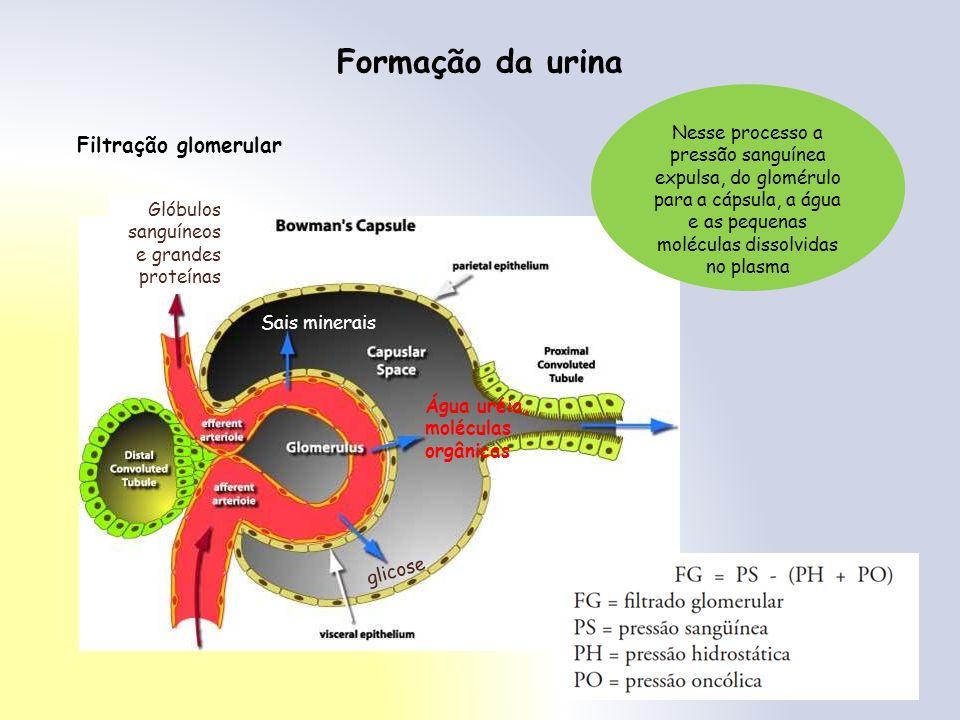 Formação da urina Filtração glomerular