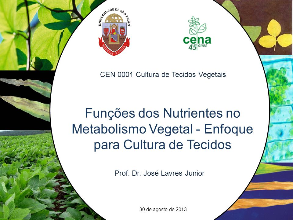 21Freeways in the plant: transporters for N, P and S and their regulation. CEN 0001 Cultura de Tecidos Vegetais.