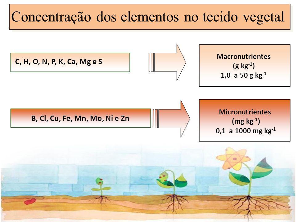 Concentração dos elementos no tecido vegetal