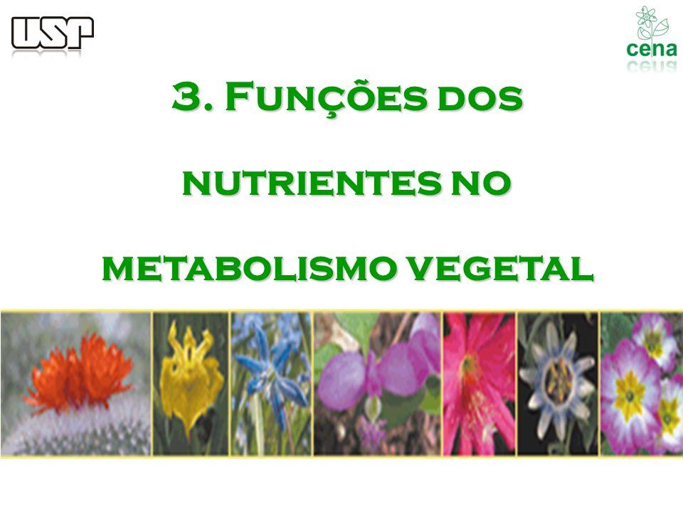 3. Funções dos nutrientes no metabolismo vegetal