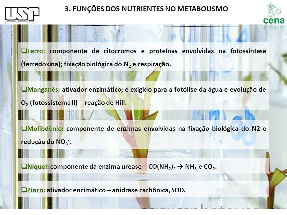 3. FUNÇÕES DOS NUTRIENTES NO METABOLISMO