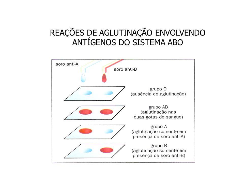 REAÇÕES DE AGLUTINAÇÃO ENVOLVENDO ANTÍGENOS DO SISTEMA ABO