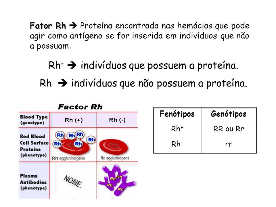 Rh+  indivíduos que possuem a proteína.