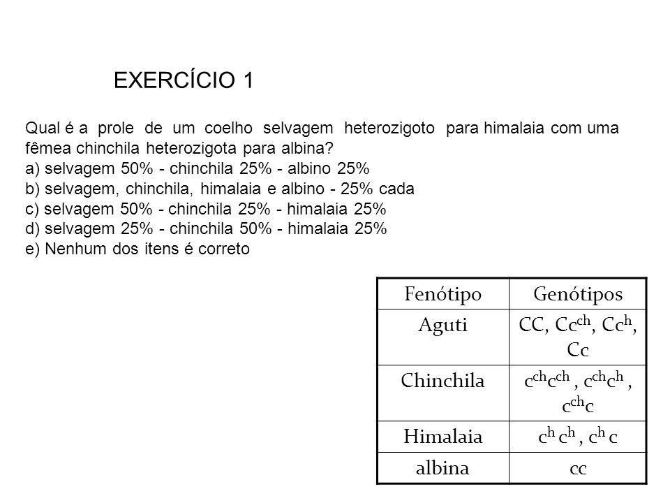 EXERCÍCIO 1 Fenótipo Genótipos Aguti CC, Ccch, Cch, Cc Chinchila