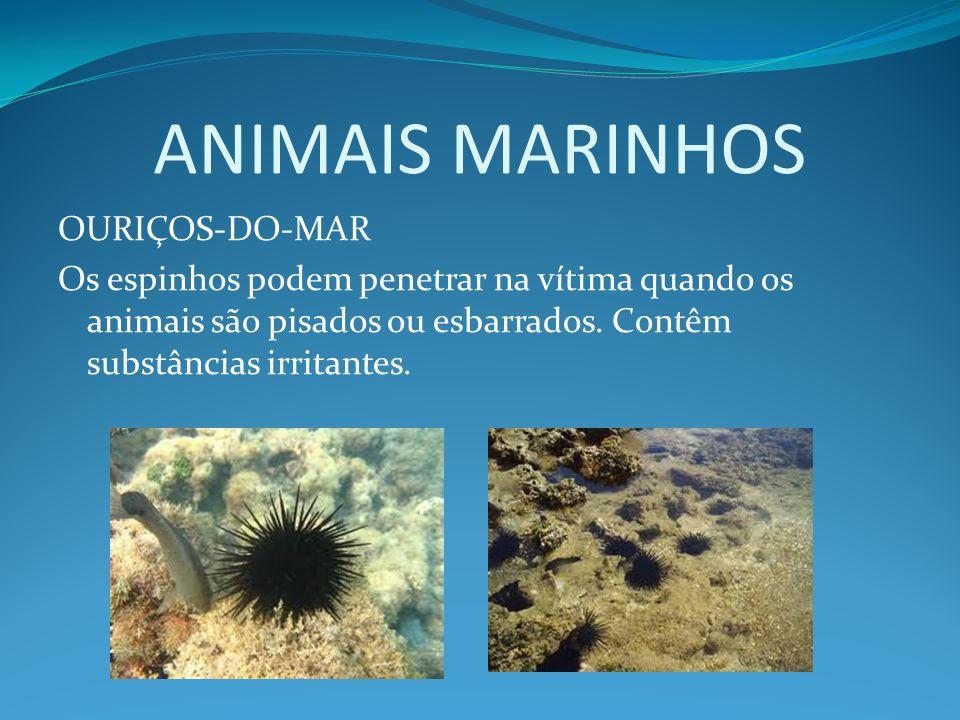 ANIMAIS MARINHOS OURIÇOS-DO-MAR