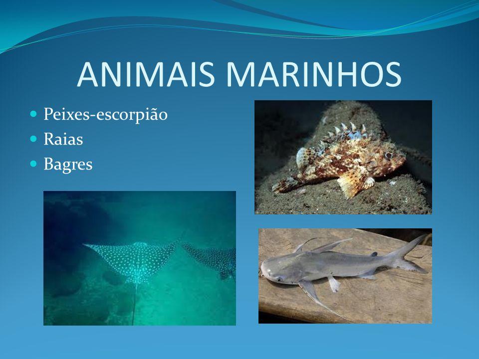 ANIMAIS MARINHOS Peixes-escorpião Raias Bagres