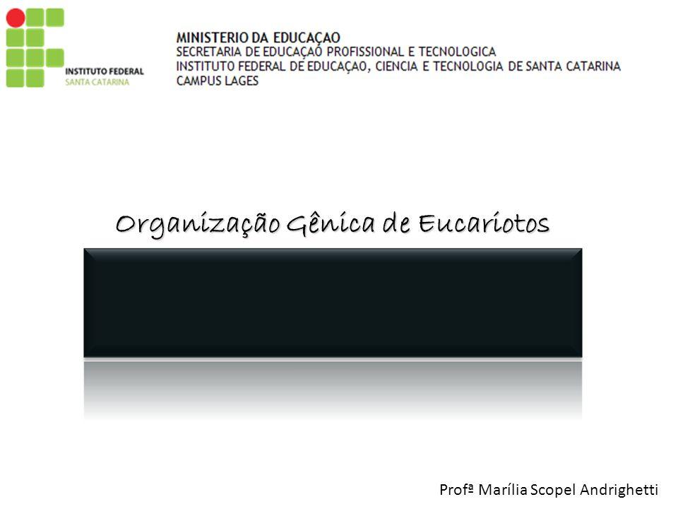 Organização Gênica de Eucariotos