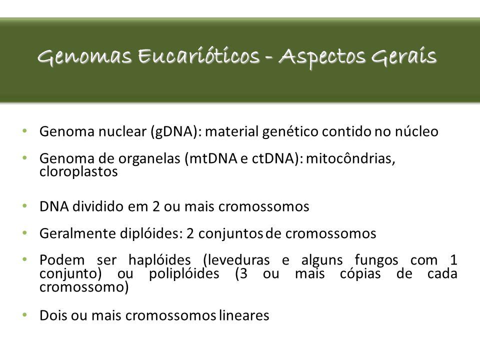 Genomas Eucarióticos - Aspectos Gerais