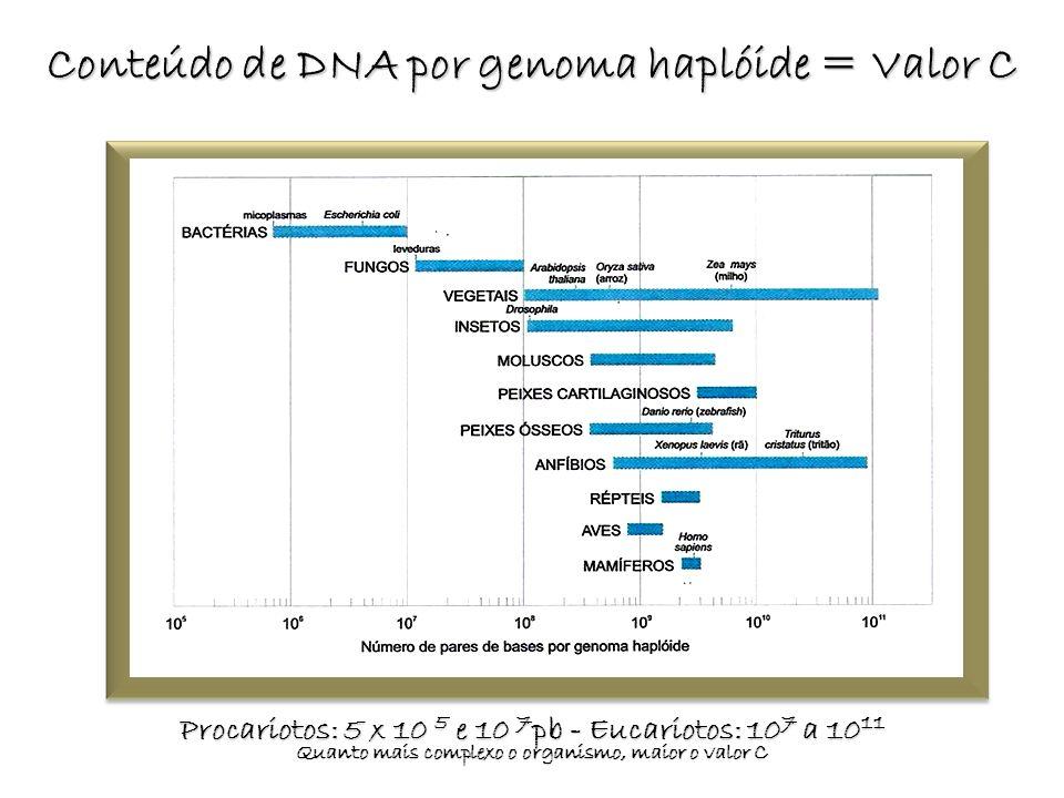 Conteúdo de DNA por genoma haplóide = Valor C