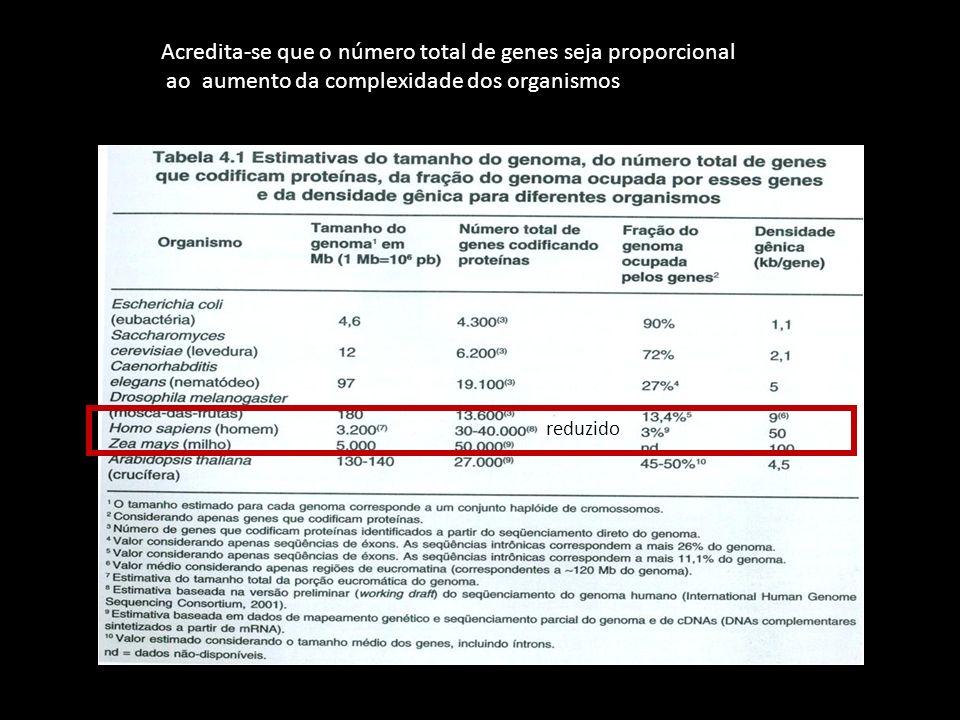 Acredita-se que o número total de genes seja proporcional