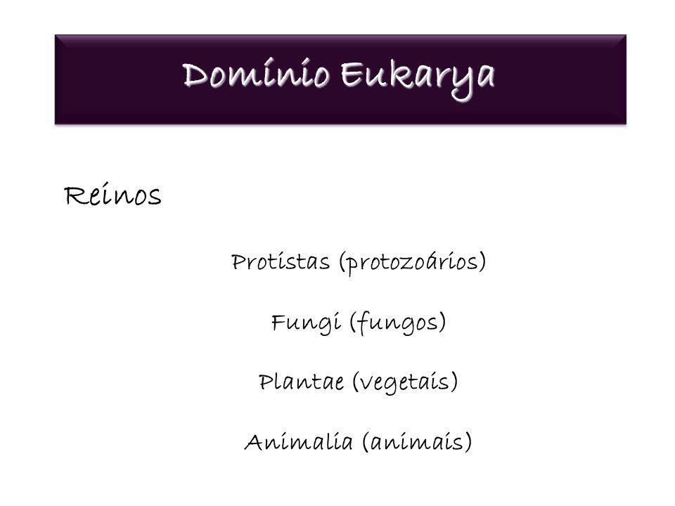 Protistas (protozoários)