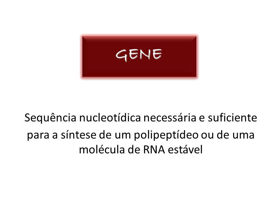 GENESequência nucleotídica necessária e suficiente para a síntese de um polipeptídeo ou de uma molécula de RNA estável.