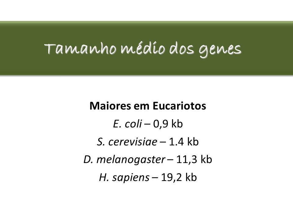 Tamanho médio dos genes