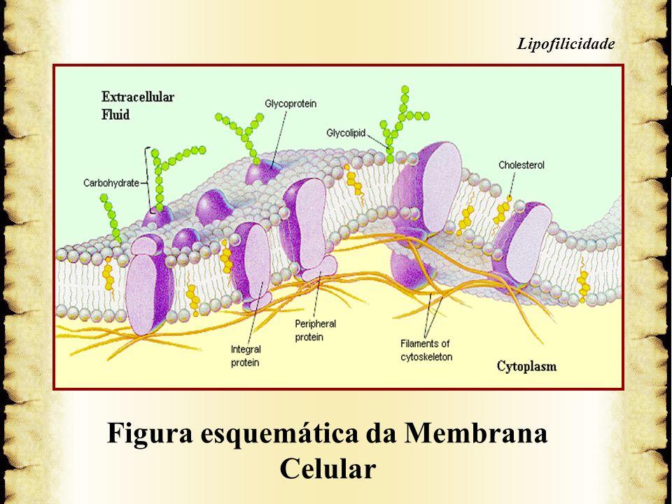 5. Membrana Celular Figura esquemática da Membrana Celular