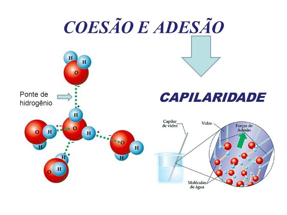 COESÃO E ADESÃO Ponte de hidrogênio CAPILARIDADE