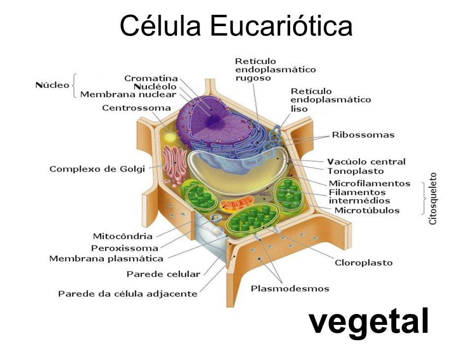 Célula Eucariótica vegetal