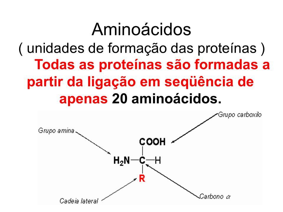Aminoácidos ( unidades de formação das proteínas )