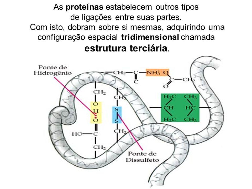 As proteínas estabelecem outros tipos de ligações entre suas partes.