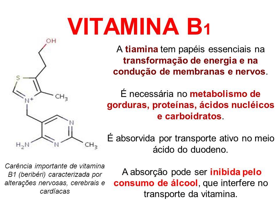 É absorvida por transporte ativo no meio ácido do duodeno.