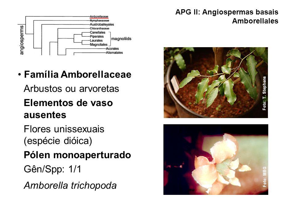 APG II: Angiospermas basais Amborellales
