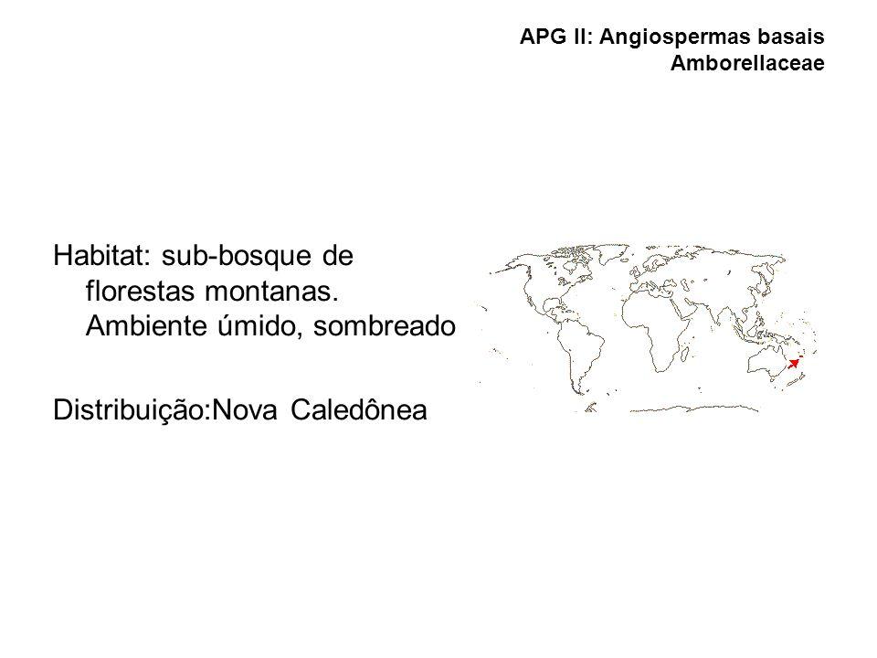 APG II: Angiospermas basais Amborellaceae