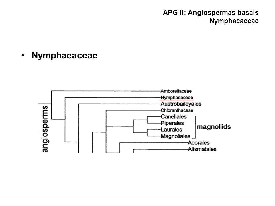 APG II: Angiospermas basais Nymphaeaceae