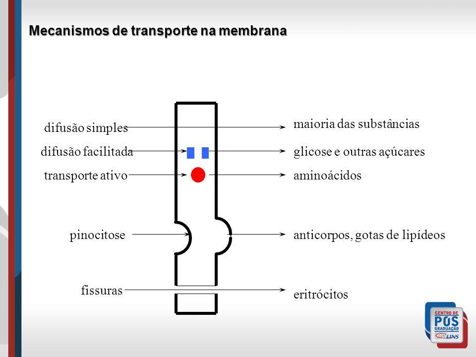 Mecanismos de transporte na membrana