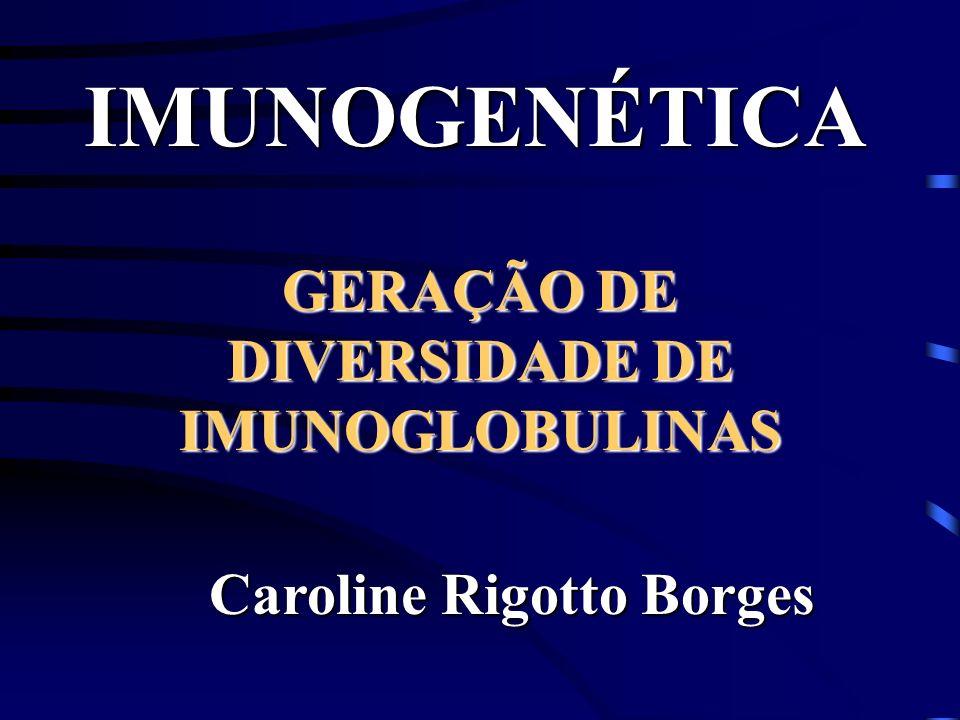 GERAÇÃO DE DIVERSIDADE DE IMUNOGLOBULINAS Caroline Rigotto Borges