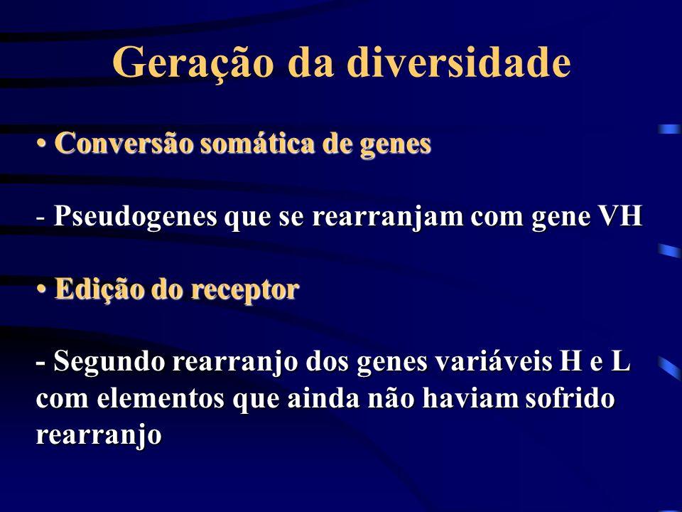 Geração da diversidade