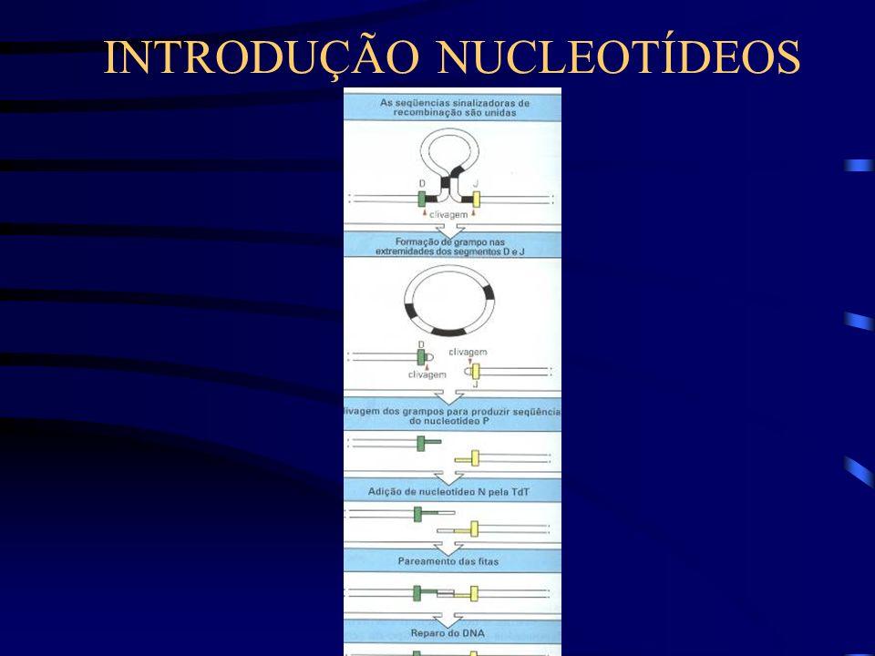 INTRODUÇÃO NUCLEOTÍDEOS