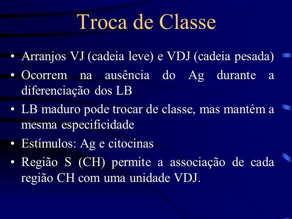 Troca de Classe Arranjos VJ (cadeia leve) e VDJ (cadeia pesada)