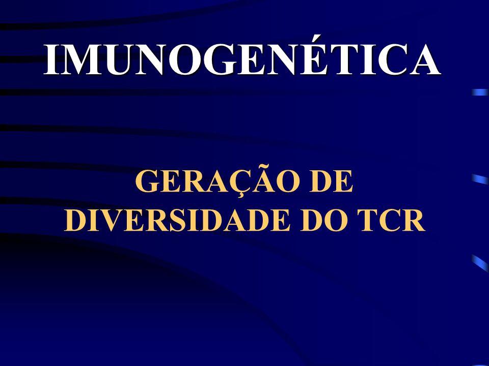 GERAÇÃO DE DIVERSIDADE DO TCR