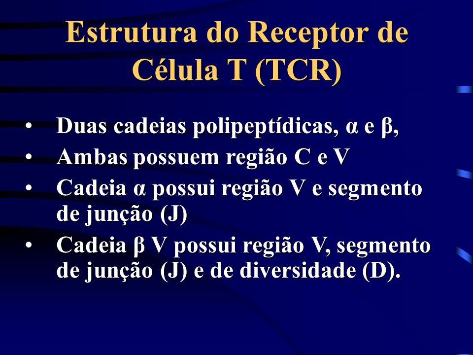Estrutura do Receptor de Célula T (TCR)