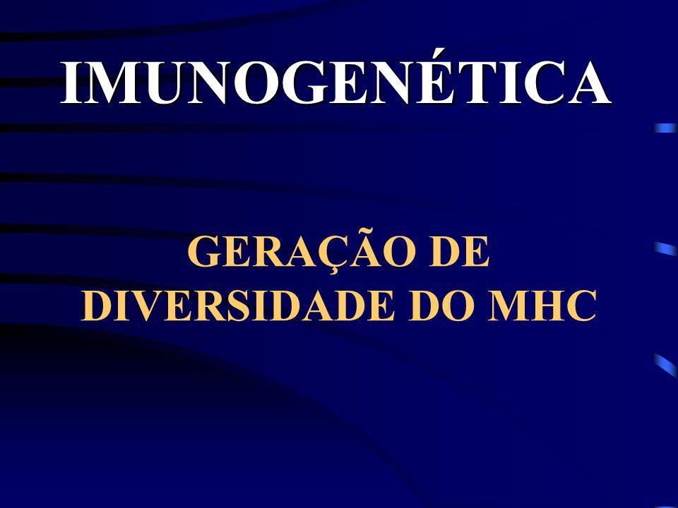 GERAÇÃO DE DIVERSIDADE DO MHC