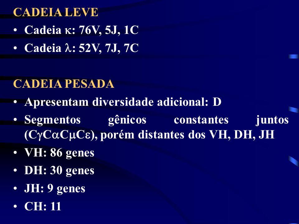 CADEIA LEVE Cadeia : 76V, 5J, 1C. Cadeia : 52V, 7J, 7C. CADEIA PESADA. Apresentam diversidade adicional: D.