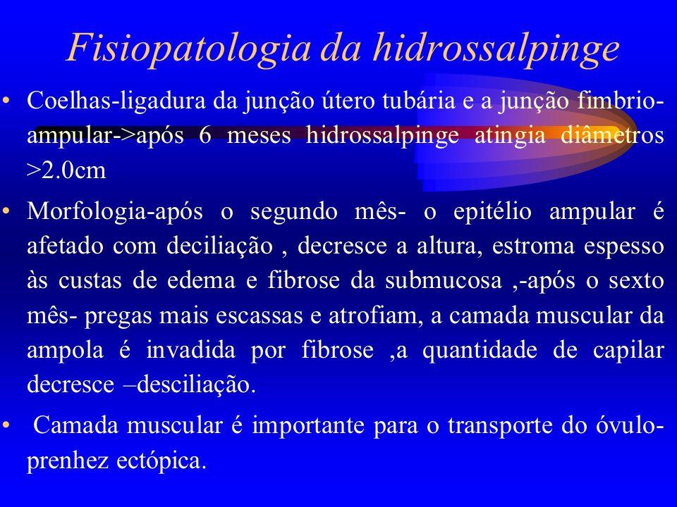 Fisiopatologia da hidrossalpinge