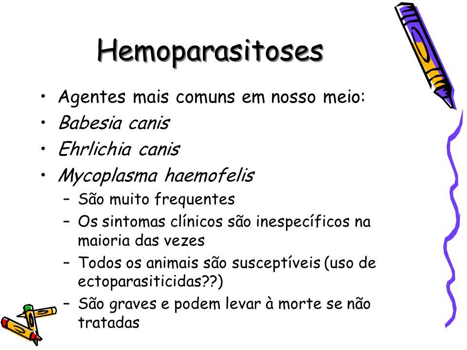 Hemoparasitoses Agentes mais comuns em nosso meio: Babesia canis