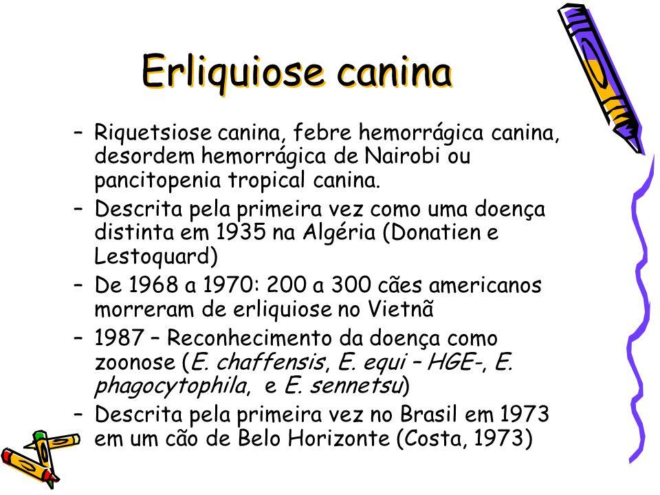 Erliquiose canina Riquetsiose canina, febre hemorrágica canina, desordem hemorrágica de Nairobi ou pancitopenia tropical canina.