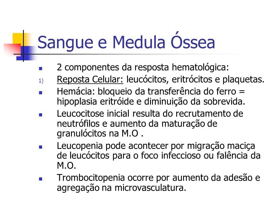 Sangue e Medula Óssea 2 componentes da resposta hematológica: