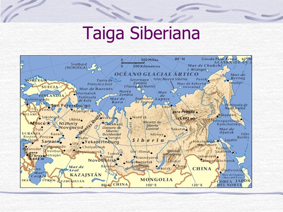Taiga Siberiana
