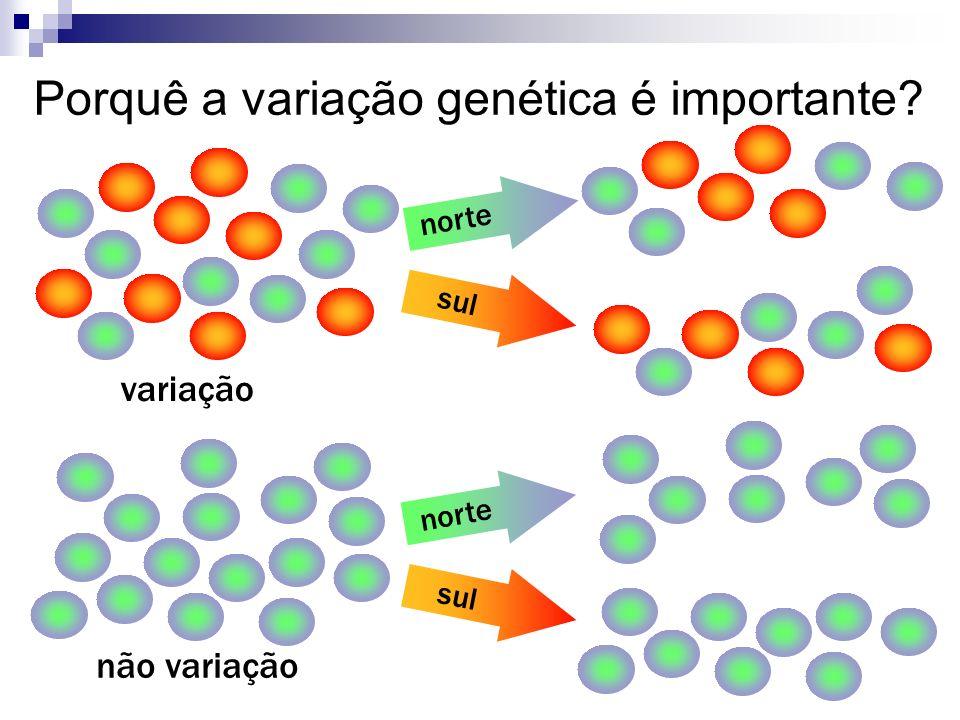 Porquê a variação genética é importante